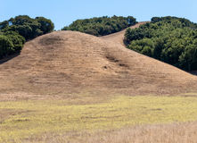 California hillside Stock Image