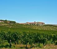 california kraju południowy wino Zdjęcia Royalty Free