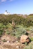 california latarnia morska Zdjęcia Royalty Free