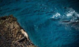 California Marine Wildlife Harbor Seals Fotografia Stock Libera da Diritti
