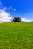 California meadow hills with oak tree Stock Photography