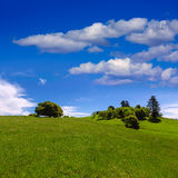 California meadow hills with oak tree Stock Image