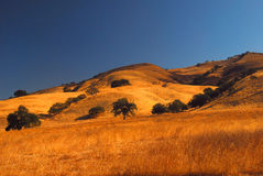 California Landscape. California Oak trees in Autumn Royalty Free Stock Photography