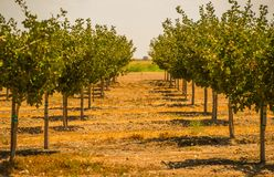 California Orchards Royalty Free Stock Photos