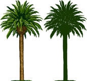 California Palm Tree And Silhouette Royalty Free Stock Photo