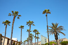 California palm trees against the blue sky Royalty Free Stock Photography