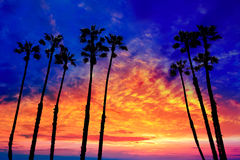 California palm trees sunset with colorful sky royalty free stock image