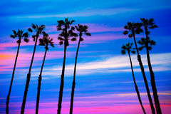 California palm trees sunset with colorful sky Royalty Free Stock Photos