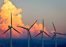 california palmowy władzy wiosna wiatr Zdjęcia Stock
