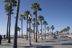 California Palms Royalty Free Stock Photography