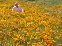 California Poppy Enjoyment Royalty Free Stock Images