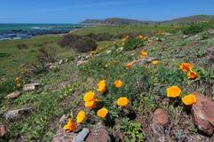 California poppy field, Big Sur, California Stock Images