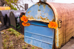 California poppy grunge mailboxes along Pacific Highway Route 1 Royalty Free Stock Photos