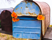 California poppy grunge mailboxes along Pacific Highway Route 1 Royalty Free Stock Photography