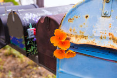 California poppy grunge mailboxes along Pacific Highway Route 1 Stock Image