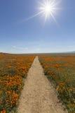 California Poppy Path Royalty Free Stock Photos