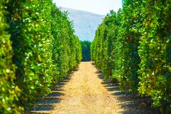 California Produce Farm. Cultivation of Californian Fruits Stock Photo