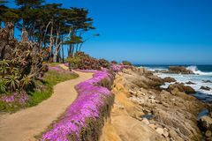 Free California Purple Stock Photos - 114926913