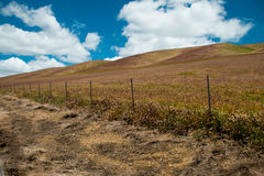 California ranch lands. Deep blue skies, billowing clouds, make for a beautiful backdrop for the rolling hills, that make up this landscape of California ranch Stock Photo