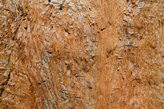 California redwood trunk closeup Stock Photos