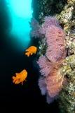 California reef Stock Photos