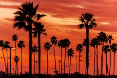 California Sanset Scenery. Reddish Sunset Sky and California Palms. Sunset Background stock images