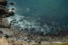 California Sea Lion Colony Stock Images