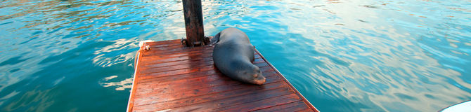 California Sea Lion on harbor boat dock in Cabo San Lucas Baja Mexico Stock Photos