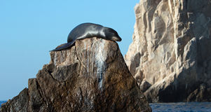 "California Sea Lion on ""the Point"" or ""Pinnacle of Lands End"" of Los Arcos in Cabo San Lucas in Baja Mexico Stock Photo"