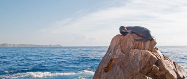 "California Sea Lion Resting On ""the Point"" Or ""Pinnacle Of Lands End"" Of Los Arcos In Cabo San Lucas In Baja Mexico Royalty Free Stock Photography"