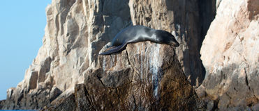 "California Sea Lion resting on ""the Point"" or ""Pinnacle of Lands End"" of Los Arcos in Cabo San Lucas in Baja Mexico Stock Photos"