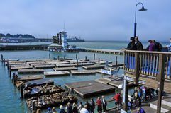 California sea lions on Pier 39 in San Francisco Stock Photos