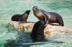 California seal Royalty Free Stock Photography