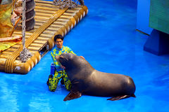 California seal show at ocean park hong kong Royalty Free Stock Photo