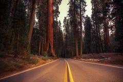 California Sierra Nevada Road foto de archivo libre de regalías