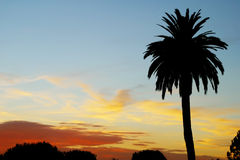 California Sunset. A palm tree in front of a sunset Royalty Free Stock Images
