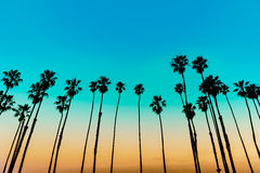 Free California Sunset Palm Tree Rows In Santa Barbara Royalty Free Stock Image - 37498806