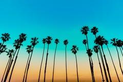 California sunset Palm tree rows in Santa Barbara. US Royalty Free Stock Image