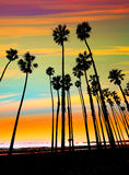 California sunset Palm tree rows in Santa Barbara royalty free stock image