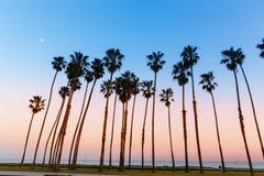 California sunset Palm tree rows in Santa Barbara stock photos