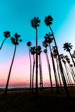 California sunset Palm tree rows in Santa Barbara Stock Photo