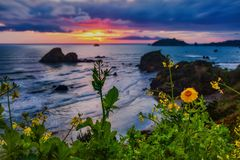 California Sunset With Wildflowers, Northern California, USA Royalty Free Stock Photos