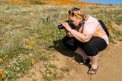 Adult woman takes photos with a camera at the Antelope Valley Poppy Reserve in California during the superbloom stock photography
