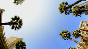 California Tropical Palm Trees Driving stock footage