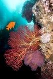 California underwater reef Stock Photo
