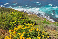 Big Sur, beach, Pacific Ocean, nature, green, landscape, wild, California, United States of America, Usa Royalty Free Stock Images
