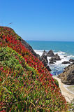 Bodega Bay, Pacific Ocean, rock, cliff, green, California, United States of America, Usa, flowers, beach. Panoramic view of Pacific Ocean in Bodega Bay on June Stock Photo