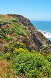 Bodega Bay, Pacific Ocean, rock, cliff, green, California, United States of America, Usa. Panoramic view of Pacific Ocean in Bodega Bay on June 13, 2010. Bodega Stock Images