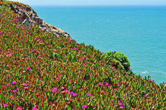 Bodega Bay, Pacific Ocean, rock, cliff, green, California, United States of America, Usa, flowers. Panoramic view of Pacific Ocean in Bodega Bay on June 13, 2010 stock photos