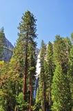 California, United States of America, Usa, Yosemite Park, nature reserve, green, landscape, mountain, waterfall, fall. Yosemite Falls seen trough giant sequoia Royalty Free Stock Photos